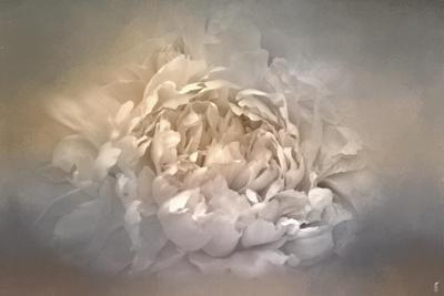 Blushing Silver and Gold Peony