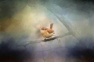 Brighten My World Wren by Jai Johnson