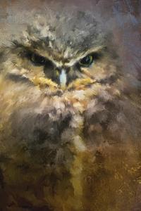 Burrowing Owl by Jai Johnson