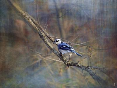 Color My World Blue Jay by Jai Johnson