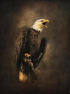 Crying for the Lost Bald Eagle by Jai Johnson