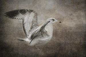 Dance of the Lone Gull by Jai Johnson