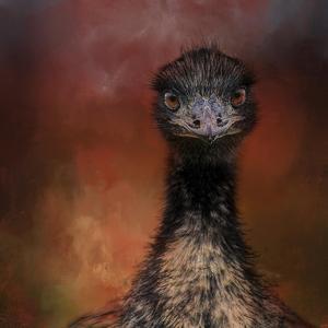 Emu Stare by Jai Johnson