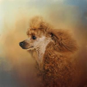 Enjoying the Breeze Apricot Poodle by Jai Johnson