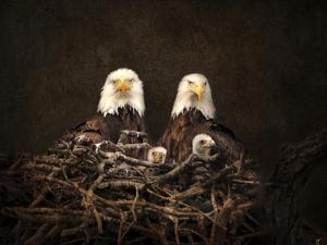 Family Is Forever Bald Eagles by Jai Johnson