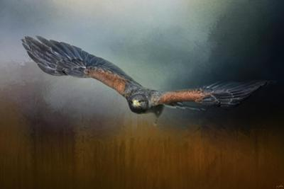 Flight of the Harris Hawk by Jai Johnson