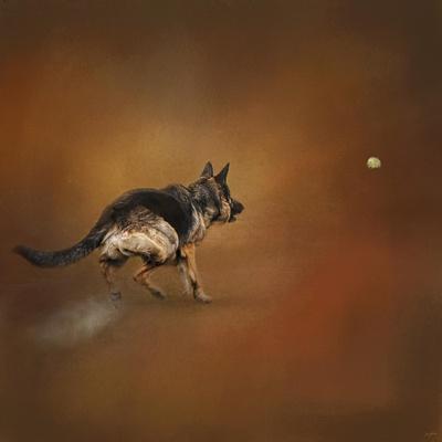Gimme That Ball German Shepherd