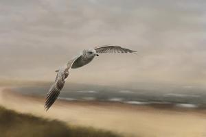 Gull at the Shore by Jai Johnson