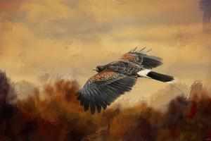 Harris Hawk in Autumn by Jai Johnson