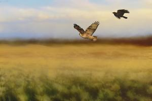 Hawk on the Run by Jai Johnson