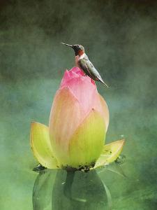 Hummingbird and the Lotus Flower by Jai Johnson