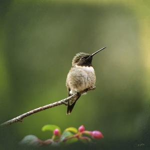 Hummingbird in the Garden by Jai Johnson