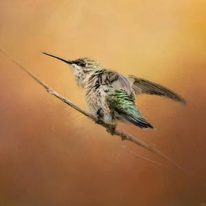 Hummingbird on Peach by Jai Johnson