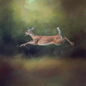 I Can Fly White Tailed Fawn by Jai Johnson