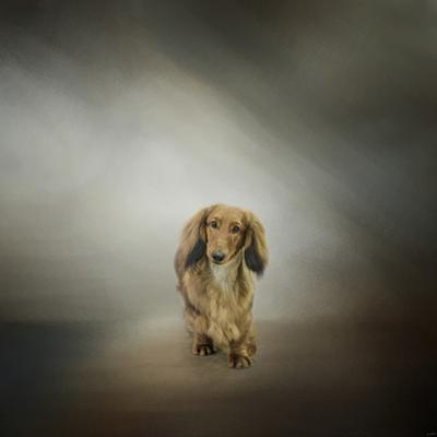 It's Showtime Baby Red Dachshund Dog by Jai Johnson