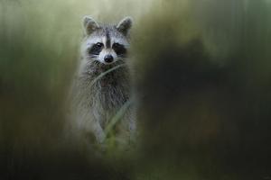 Little Bandit by Jai Johnson