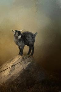 Little Rock Climber by Jai Johnson