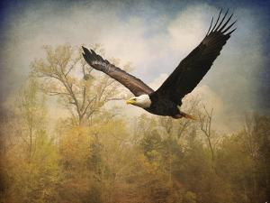Monarch of the Skies Bald Eagle by Jai Johnson