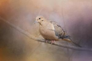 Mourning Dove on a Winter Evening by Jai Johnson