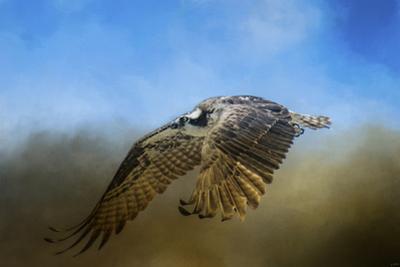 Osprey over Pickwick