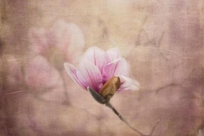 Pink Magnolia 2
