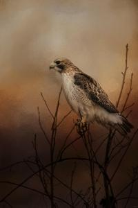 Red Tail in Wait by Jai Johnson
