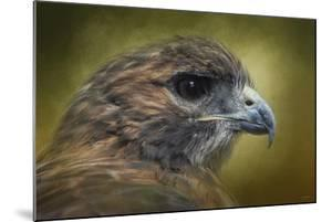 Red Tailed Hawk at Reelfoot by Jai Johnson