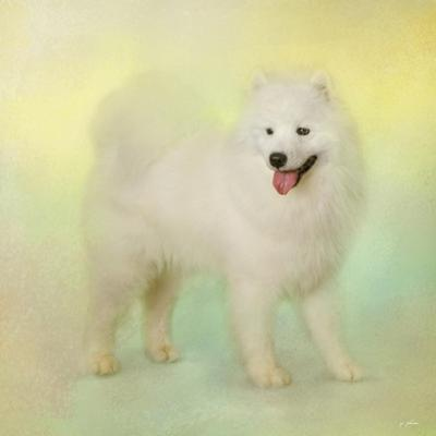 Samoyed in Spring by Jai Johnson