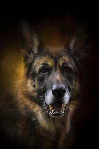 Shepherd Glow by Jai Johnson