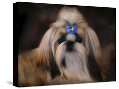 Shih Tzu with Blue Bow