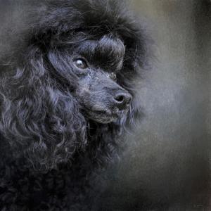 Snack Spotter Toy Black Poodle by Jai Johnson