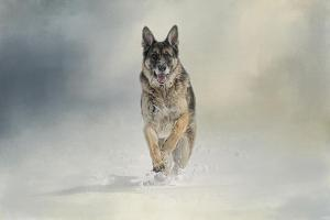Snow Day for the Shepherd by Jai Johnson