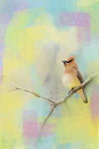 Song of the Waxwing by Jai Johnson
