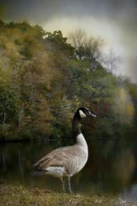 The Canadian Goose by Jai Johnson