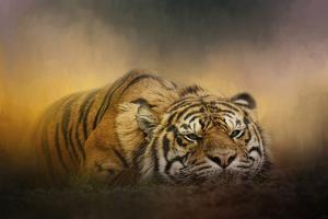 The Tiger Awakens by Jai Johnson