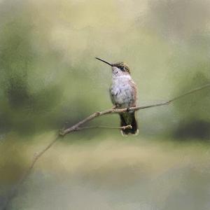 Tiny Visitor Hummingbird by Jai Johnson