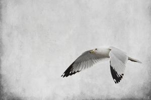 Winters Return by Jai Johnson