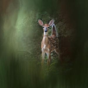 Woodsy Summer Fawn by Jai Johnson