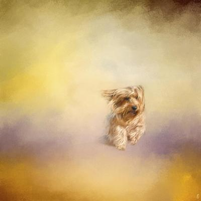 Yorkie Running into the Wind