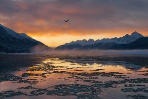 A Bald Eagle, Haliaeetus Leucocephalus, Flies over an Icing Chilkat River at Dawn by Jak Wonderly