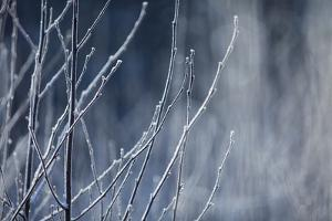 Frost on Bushes on a Cold December Morning by Jak Wonderly