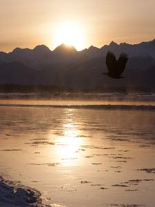 Golden Sunlight over the Chilkat River and Mountains by Jak Wonderly
