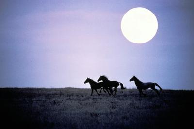 Silhouette of Wild Horses Running in Field at Dusk with Moon by Jake Rajs