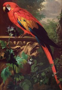 Scarlet Macaw in a Landscape by Jakob Bogdani Or Bogdany