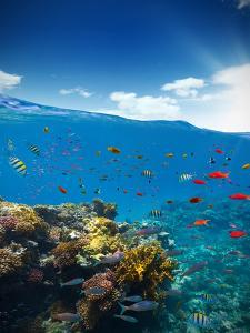 Underwater Coral Reef with Horizon and Water Waves by Jakub Gojda