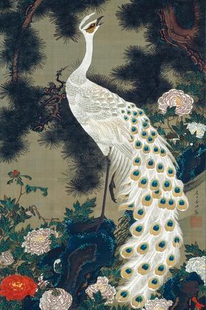 A Peacock, Pine and Peony
