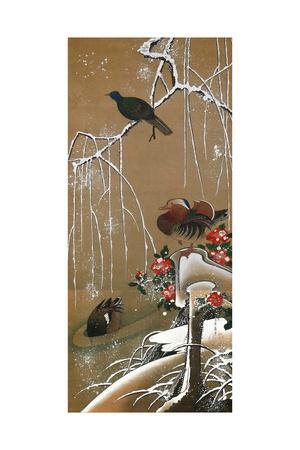 Mandarin Duck in the Snow 2