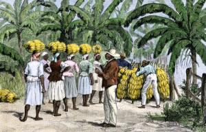 Jamaican Women Carrying Bananas to a Seaport, 1800s