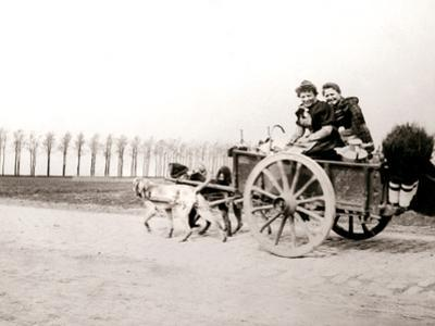Dogs Pulling Women on a Cart, Antwerp, 1898 by James Batkin