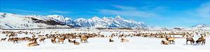 National Elk Refuge - Jackson Hole, Wyoming by James Blakeway